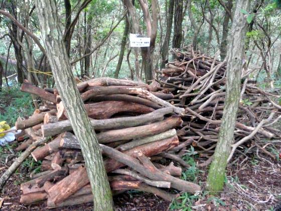 伐採木.jpg