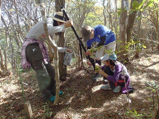 木の高さを測る