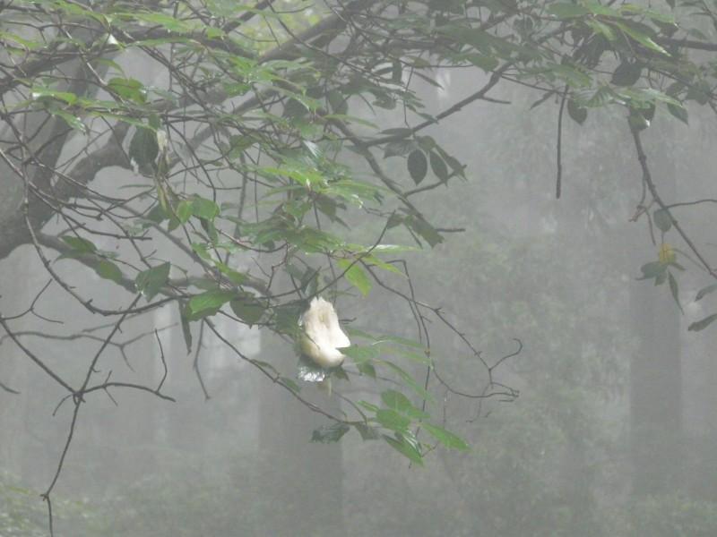 21-②モリアオガエルの卵塊を観察P1210469